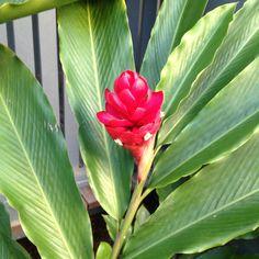 Hamilton Island, Whitsundays, Queensland. Hamilton Island, Plants, Plant, Planets