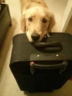 You're taking me with you, right? . . #dogs #dogoftheday #ilovemydog #puppy #lovedogs #servicedog #petlovers #doglovers #dog #puppylover #pets