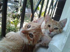 Mila y Leo