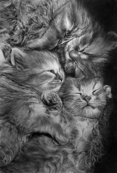 3 Babies Cats by paullung
