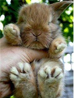 Cute animals world