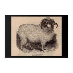 19th century print Highland sheep Acrylic Wall Art - chic design idea diy elegant beautiful stylish modern exclusive trendy