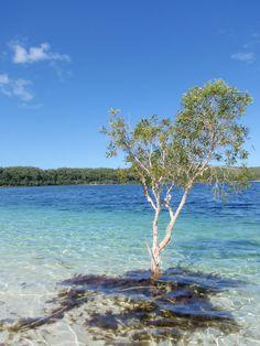 Lake Mackenzie, Fraser Island, Australia