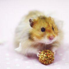 simon-le-hamster-5-x-5