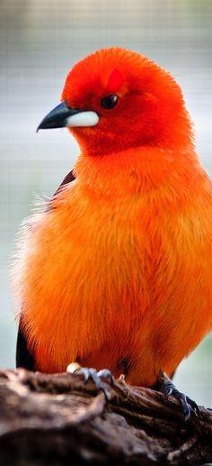 Beautiful vibrant-vivid orange