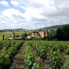 Beaujolais region, France