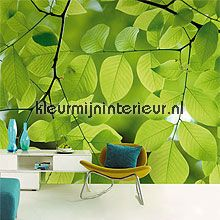 Wallpower Wanted 301617 van Eijffinger groene blaadjes fotobehang bij kleurmijninterieur.nl