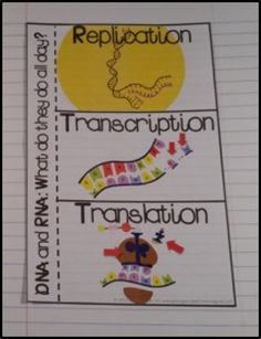 DNA Replication, Transcription, and Translation