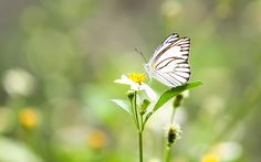 Create a Butterfly Habitat in Your Yard