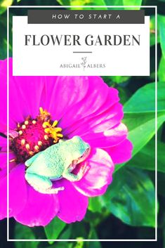 Are you wanting a flower garden but have no idea how or where to start? Here you will find an introduction to planting flowers along with my seed recommendations and care instructions. #howtogrowflowers #flowergarden101 #growingflowersfromseeds #tipsonhowtogrowflowers #gardeningflowersforbeginners
