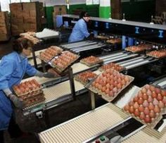Farm fresh white and brown eggs Fresh Chicken, White Chicken, Brown Eggs, Construction Design, Farming, Poultry, Beef, Animal