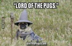 Lord of the Pugs | Join the Pugs
