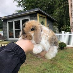 That's a cute handful. That's a cute h. - That's a cute handful. That's a cute handful. Cute Little Animals, Cute Funny Animals, Cute Dogs, Baby Animals Pictures, Cute Animal Photos, Fluffy Animals, Animals And Pets, Fluffy Cows, Fluffy Bunny