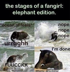 Fangirls.......ELEPHANT EDITION! hahahah