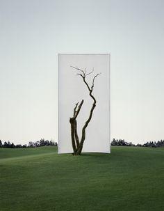 La Nature encadrée par Myoung Ho Lee (4)