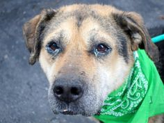 RUDOLF...NY...PetHarbor.com: Animal Shelter adopt a pet; dogs, cats, puppies, kittens! Humane Society, SPCA. Lost & Found.