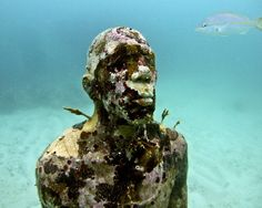 MUSA (Underwater Museum of Art) is in the waters surrounding Cancun and Isla Mujeres and has over 500 life-size sculptures used to promote coral life. The Places Youll Go, Places To Visit, Coral Life, Relic Hunter, Underwater Art, Musa, Art Museum, Places To Travel, Mount Rushmore