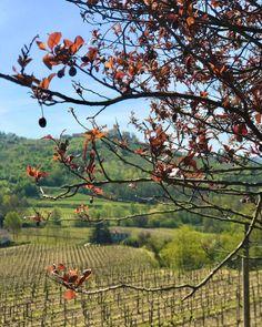 #Fantinel #TenutaSantHelena #venco #dolegnadelcollio #friuliveneziagiulia #italy #wines #italianlandscapes #italianwines #landscapephotography #vineyards #winery #hills #countryside Fruit, Beauty, Beauty Illustration