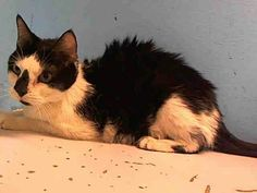 Manhattan NY.  Special.  Neutered 13 yr old male.  Dies in a.m.  See Pets on Death Row- Urgent Death on fb.