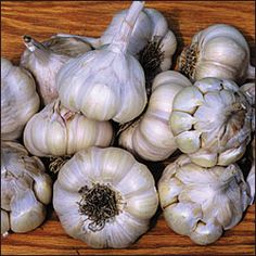 Highly productive and adaptable strain. Heirloom variety from Chet Stevenson of Tonasket, Washington, found growing wild in an abandoned garden along the roadside. A good garlic for eating raw, because the flavor is not too strong. Softneck, 12-16 cloves per bulb.