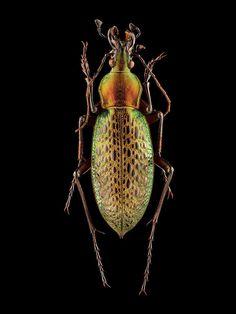 Des Photographies Macro composées de près de 10000 images montrent les Détails des Insectes (9)