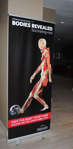 Look for all types of Bodies on various retractable banners at several of hotels on Fallsview Blvd. Retractable Banner, Banner Design, Banners, Bodies, Hotels, Studio, Banner, Study, Bunting