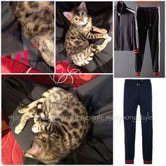 180318👖: GUCCI GG web track trousers. 💵: soldout (last seen at $920). 📷: Lyst and @jj_1986_jj IG.  #kimjaejoong #jaejoong #김재중 #ジェジュン #金在中 #korean #singer #singersongwriter #celebrity #kpop #rockstar #koreanactor #hallyustar #mensfashion #ootd #kstyle #kfashion #jaefans