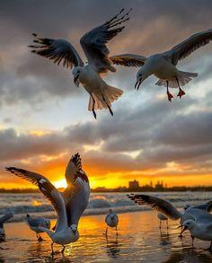 Beautiful Birds, Animals Beautiful, Seagulls Flying, Photo Animaliere, All Birds, Wild Nature, Bird Art, Nature Pictures, Amazing Nature