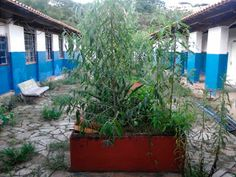 Folha do Sul - Blog do Paulão no ar desde 15/4/2012: Governo de Minas Gerais libera recursos para escol...