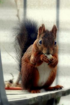336|365 The Squirrel visits.  Saturday 2013/07/13.