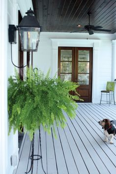 Love gas lanterns - they remind me of New Orleans and they're perfect on this porch! The dog is cute too! Burkitt Raised Luxury Home Porch Photo from houseplansandmore.com