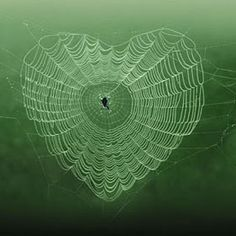 ~Spider web heart~ Nature is trying to tell us. heart each other. Let's forgive & forget and the world will be a better place for all ♡