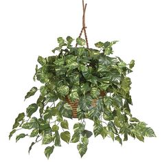 nearly natural Hanging Silk Pothos Plant, Multicolor