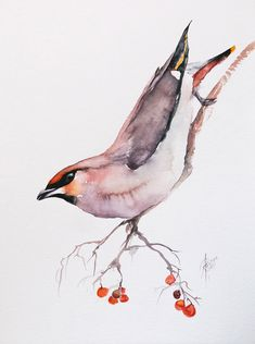 Watercolor Bird, Watercolor Paintings, Bird Artwork, Bird Drawings, Paintings For Sale, Lovers Art, Pet Birds, New Art, Amazing Art