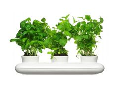 Herb Pot Trio with small opening on the side. Simply pour water into it and it will water all three herb plants at once.