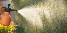 Πώς χρησιμοποιούμε την κανέλα στα φυτά του κήπου | Τα Μυστικά του Κήπου Plants, Plant, Planting, Planets