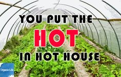 24 Pick Up Lines For Gardeners Guaranteed To Work http://www.rodalesorganiclife.com/garden/24-pick-up-lines-for-gardeners-guaranteed-to-work/slide/6