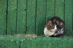 CAT AND GREEN DOOR. by JUAN GONGORA on 500px