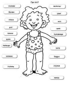 части тела в картинках для детей