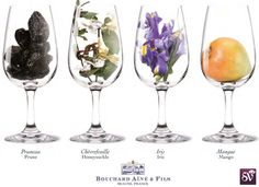 Top 100 Aromas in Wine – A to Z - Social Vignerons