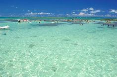 200 Localizada há 130 quilômetros da capital alagoana a cidade de Maragogi é um destino muito interessante para ser visitado durante o todo ano. O turista pensa estar no Caribe. Mar calmo, areias claras e finas cercada de coqueirais, numa...