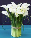 Calla Lily Arrangement / Bundle - White