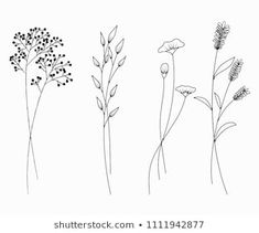 Vector Set Outline Cornflower Knapweed Centaurea témájú stockvektorkép (jogdíjmentes) 1040016511 - Hand drawn of wildflowers set isolated on white background. Simple Flower Drawing, Floral Drawing, Flower Art, Flower Outline, Doodle Drawings, Easy Drawings, Doodle Art, Doodle Frames, Botanical Line Drawing