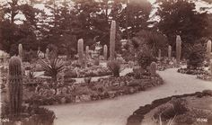 GEORGE FISKE  1835 - 1918 Arizona Garden, Del Monte. 1880-84
