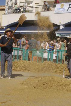 L'arròs es venta per ajudar a separar-lo encara més de la palla. El gra com pesa més cau al terra.