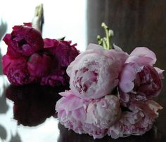 Peonies, peonies, peonies! While small, this bouquet makes a statement!