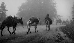 Ήπειρος: Το λεύκωμα περιλαμβάνει τριακόσες φωτογραφίες τραβηγμένες από το 1945 έως το 1970, οι οποίες καταγράφουν στιγμιότυπα από το τοπίο, τους ανθρώπους και τη λαϊκή παράδοση της Ηπείρου. Ο Άγγελος Δεληβοριάς που προλογίζει την έκδοση αναφέρει: «κάθε φωτογραφία του Μπαλάφα είναι μια μοναδική μαρτυρία του καλλιτέχνη μέσα στον χρόνο». Χαρακτηρίζει τον Μπαλάφα, «υμνωδό του έπους της Ηπείρου και των ανθρώπων της» και «μελωδό της πίκρας μιας μεταπολεμικής κοινωνίας που μάχεται με αξιοπρέπεια…