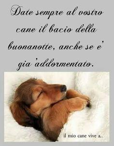 Date sempre al vostro cane il bacio della buonanotte, anche se è già addormentato.