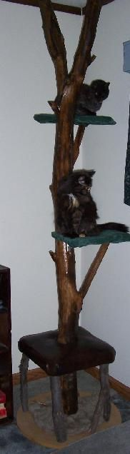 Homemade cat tree made from a large tree branch.