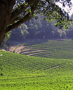 Thorevilos, California wine country